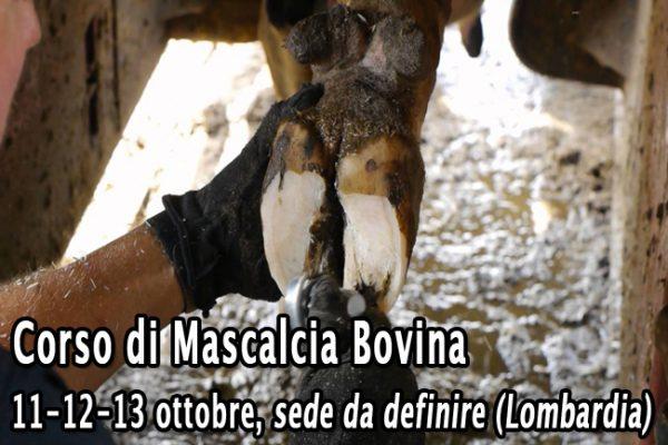Mascalcia_autunno2016